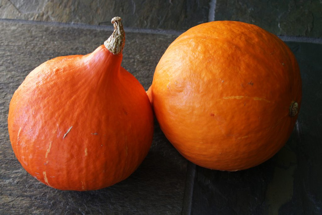 Two Red Kuri winter squashes