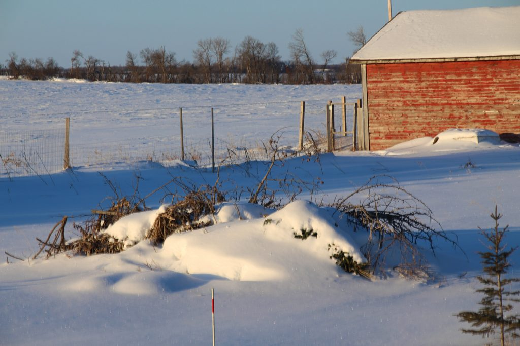 Showing snowdrifts in my yard - I am sick of winter!