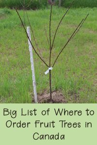 Big List of Where to Order Fruit Trees In Canada - Rural Dreams