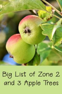Sixteen Hardy Apple Trees for Zone 2 and 3 - Rural Dreams
