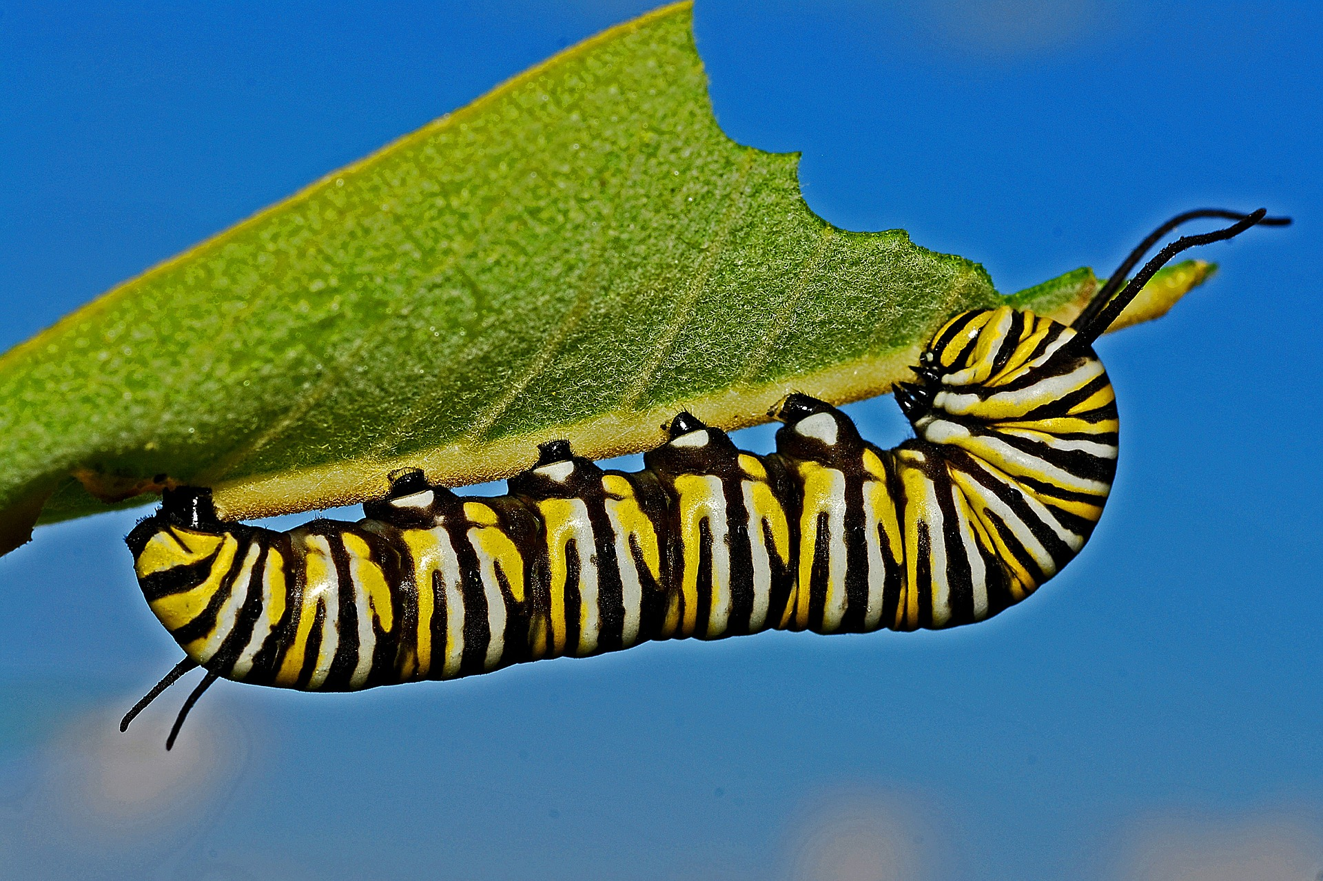 Caterpillars Are Baby Butterflies - Rural Dreams